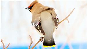 小鸟壁纸官网pc版